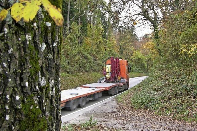 Waldschäden als Risiko