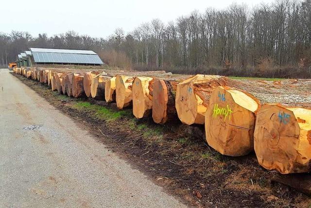 Ortenauer Laubholz bleibt gefragt – 1300 Festmeter wechseln den Besitzer
