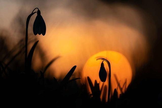 Frühlingsvorboten tanken die letzten Sonnenstrahlen