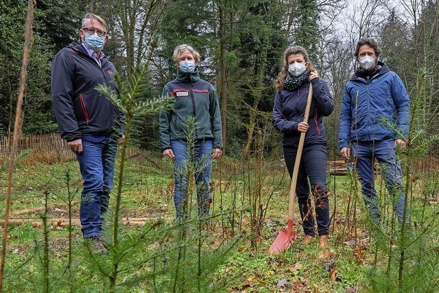 10 Schulklassen pflanzen 1200 Bäume in der