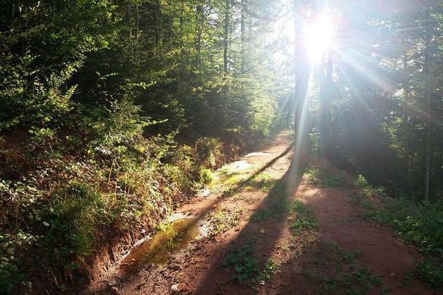 Welche Auswirkungen die neue Forstorganisation im Kreis Lörrach hat