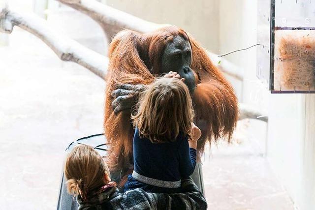 Die Pandemie kostet den Zoo Basel ein Fünftel der Eintritte