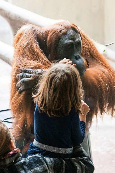 Die Pandemie spiegelt sich auch in der Besucherstatistik des Basler Zoos.    Foto: Zoo Basel (Torben Weber)