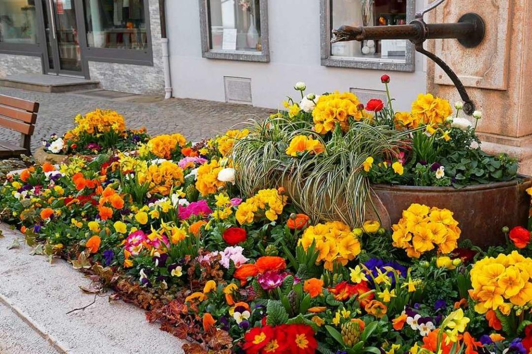 Vorbild für Schopfheim? Bepflanzte Brunnen in Bad Säckingen.    Foto: Michael Gottstein
