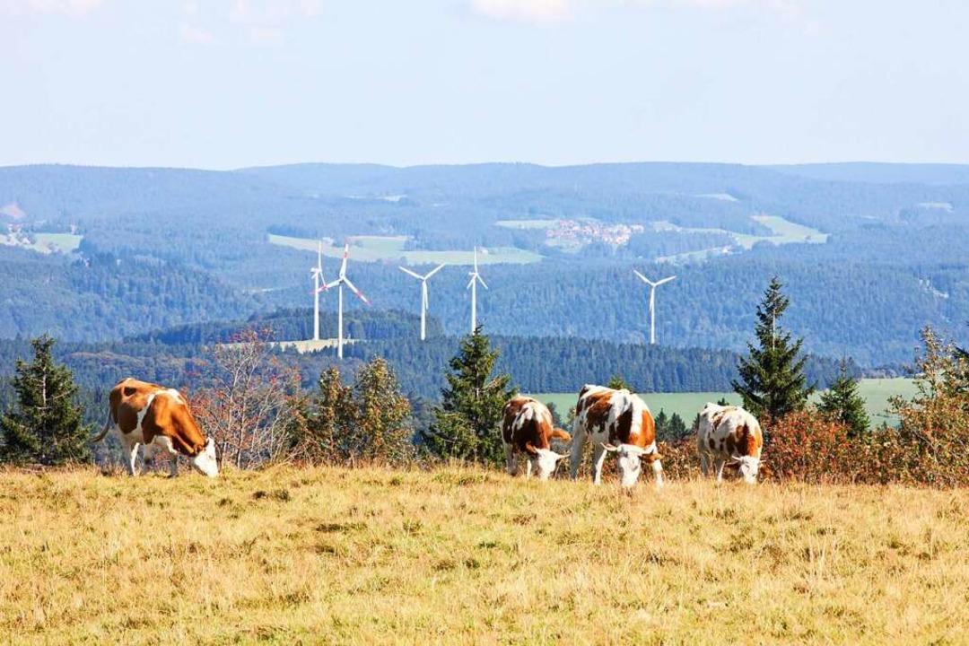 Im Jahr 2009 gab es im Schwarzwald nur...l-Simonswald extrem gering ausfallen.   | Foto: Photographer: Gabriele Zahn