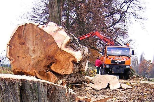 Wie Emmendingen mit einem digitalen Kataster seinen Baumbestand pflegt