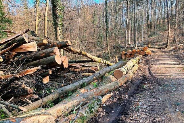 Naturschützer kritisieren Baumfällung