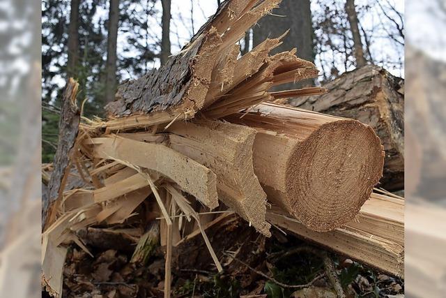 Die jungen Bäume hat es schwer getroffen