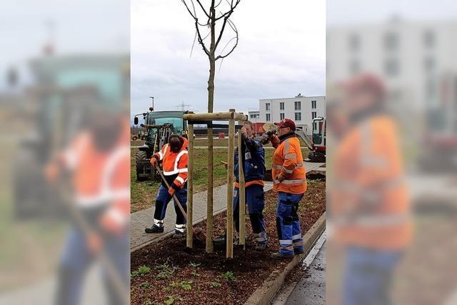 30 Bäume gepflanzt