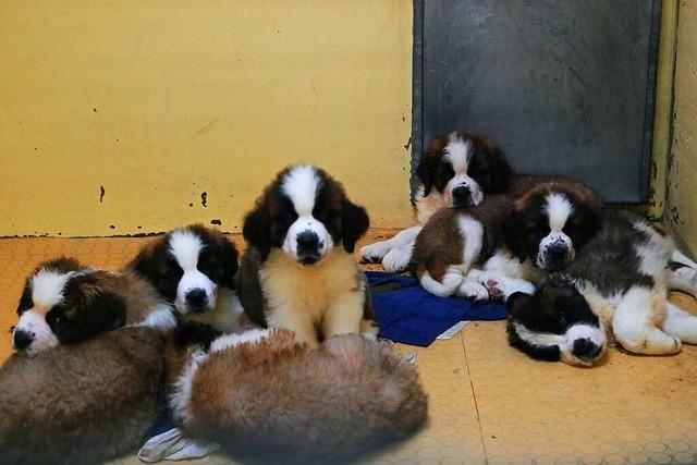 101 geschmuggelte Hundewelpen