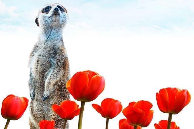 Jede Menge gute Nachrichten zum Frühlingsanfang