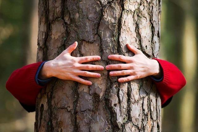 18 Fakten zum Ettenheimer Wald