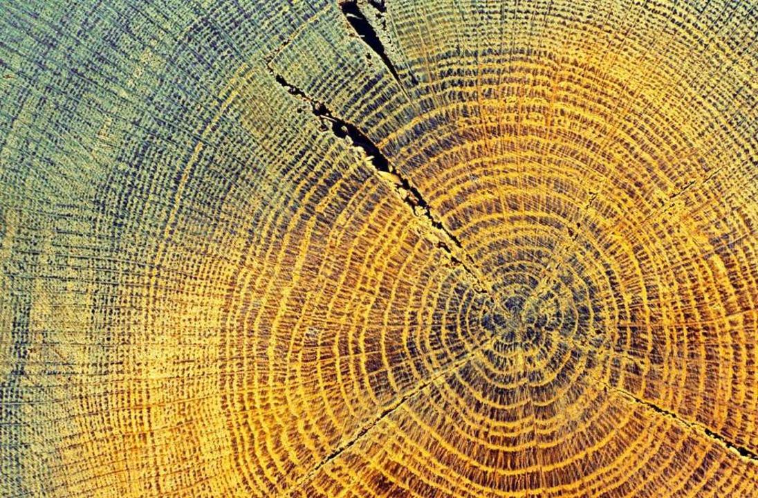 Ein historisches Wetterarchiv: Baumringe  | Foto: imago stock&people