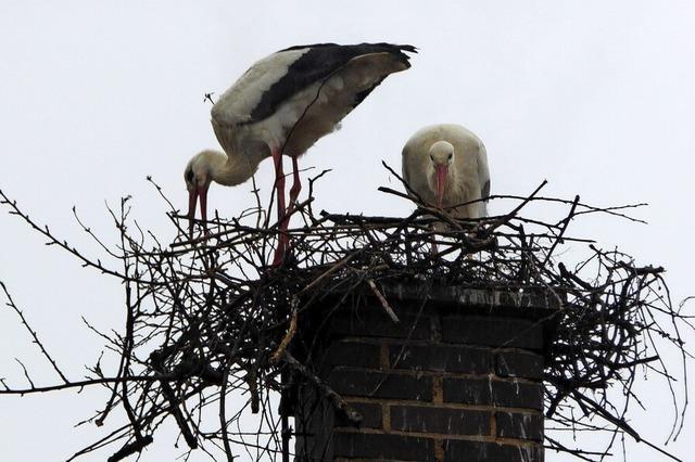 Problematischer Nestbau