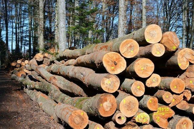 Die Tanne ist das Sorgenkind im Bollschweiler Wald
