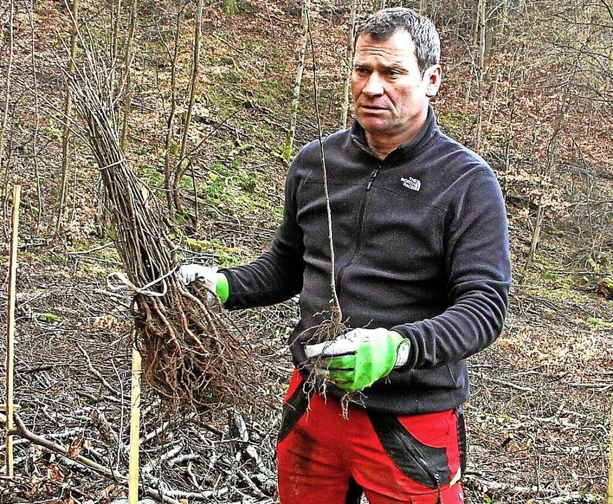 Forstmitarbeiter Ralf Stritt informier...it der Trockenheit besser klarkommen.   | Foto: Herbert Trogus