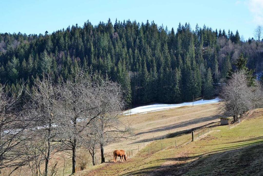Auf dem höchsten Punkt des Winterbergs...heit die verschwundene Burg Ebersbach.    Foto: Friedbert Zapf