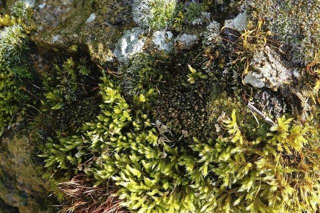 Moos – Meisterwerk der Natur