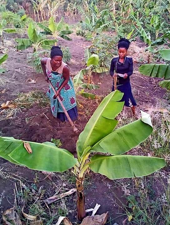Mit Hilfe von Spenden aus Bad Säckinge...ok- und Mangobäume angepflanzt werden.  | Foto: privat