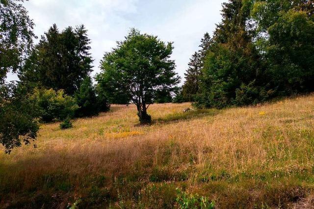 Landschaftserhaltungsverband bringt Interessen im Kreis Lörrach unter einen Hut