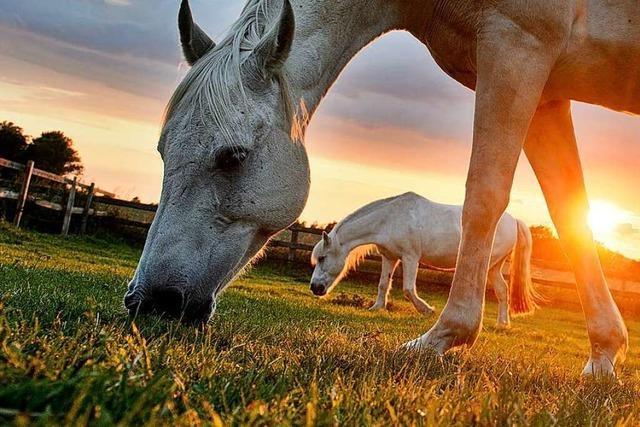 Pferde mögen es nicht, wenn sich der Boden bewegt