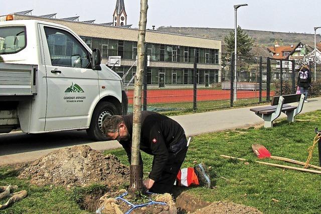 Bäume für bessere Luft und Schatten