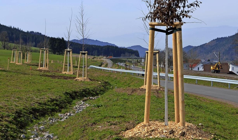 Entlang der Umfahrung Niederwinden bis...ume und Tausende Sträucher gepflanzt.   | Foto: Nikolaus Bayer