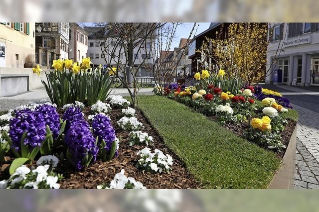Blütenpracht in der Innenstadt