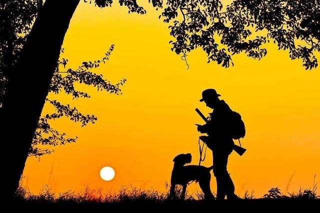 Immer mehr Kommunen setzen auf Jagd in Eigenregie