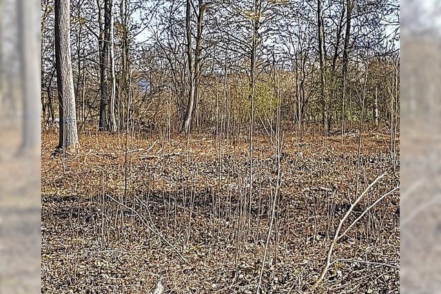 25 500 neue Bäume