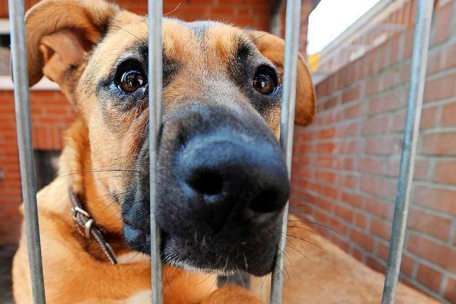 Im Tierheim in Weil am Rhein gibt es kaum noch Platz für Hunde