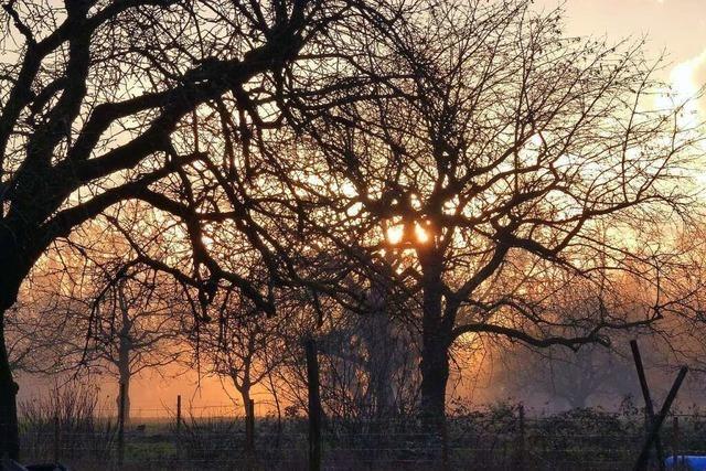 Sonnenuntergang mit Bodennebel bei Haltingen