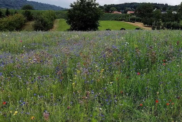 Wie eine farbenfrohe Futteridee für Bienen aus Kandern sich verbreitet