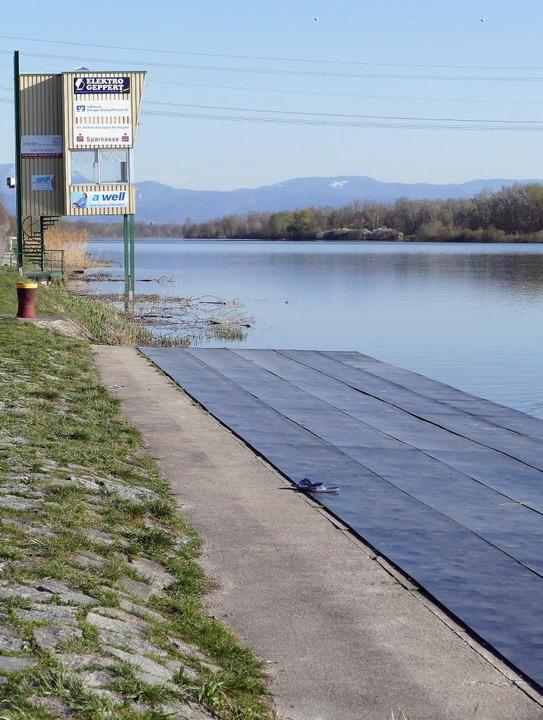 Weil sich die Altrhein-Fledermaus im a...  ein neues Rheinschwimmbad entstehen.  | Foto: Dirk Sattelberger