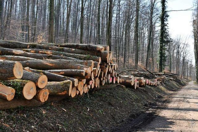Lörrach Grüne kritisieren Baumfäll-Aktion am Maienbühl – wieder einmal