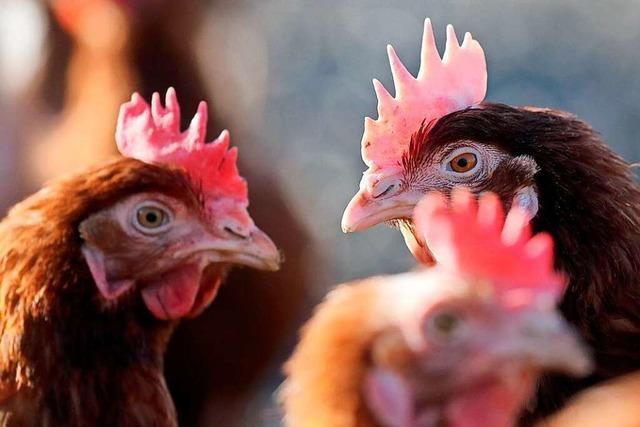 Das Landratsamt Lörrach erlässt Sperrzonen wegen der Geflügelpest