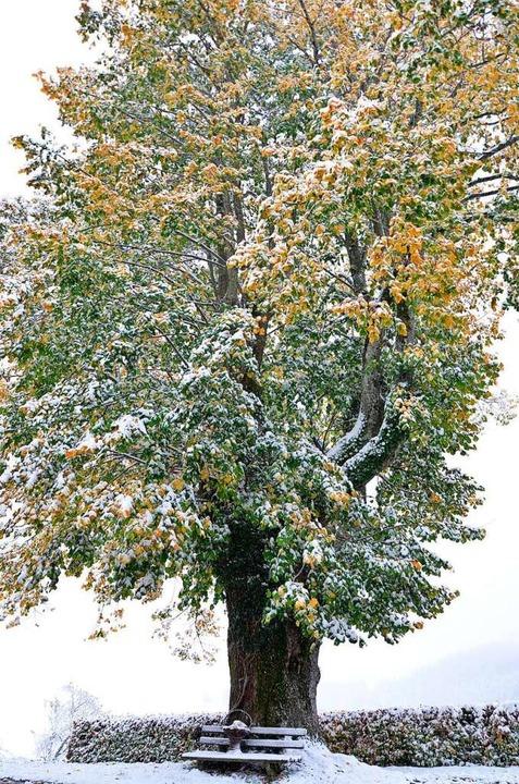 Winterkleid auf vollem Laub  | Foto: alexandra wehrle