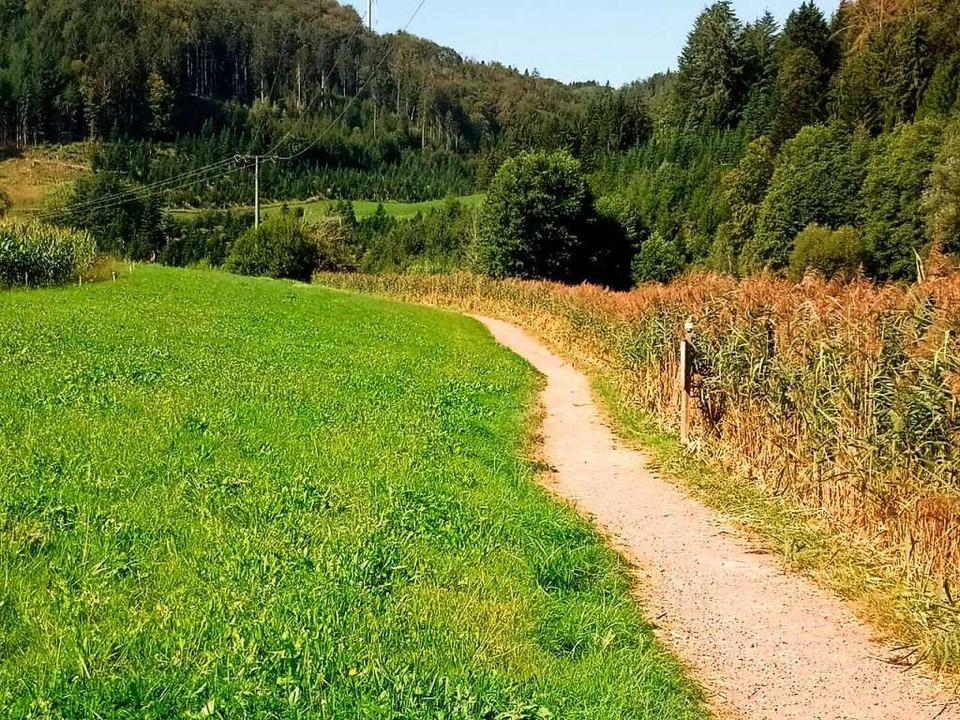 Das Litschental ist ein naturbelassene...ch, durch das der Naturlehrpfad führt.  | Foto: Helmut Stingl