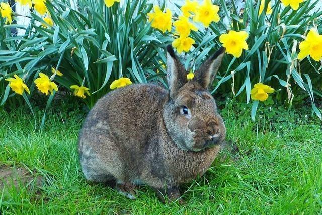 Kaninchen – die flauschigen Kollegen des Osterhasen