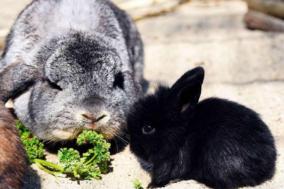 Weiches Fell und runde Augen: Das macht Kaninchen attraktiv.  | Foto: Thomas Kunz