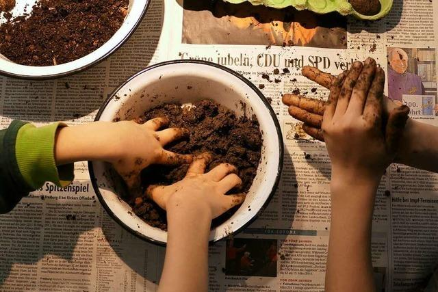 Von der Samenbombe bis zum Marienkäferhotel: Ideen für große und kleine Gärtner