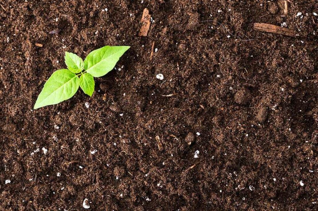 Der Boden –  ein vor Leben wimme...smen sind noch zum Großteil unbekannt.  | Foto: fotofabrika  (stock.adobe.com)
