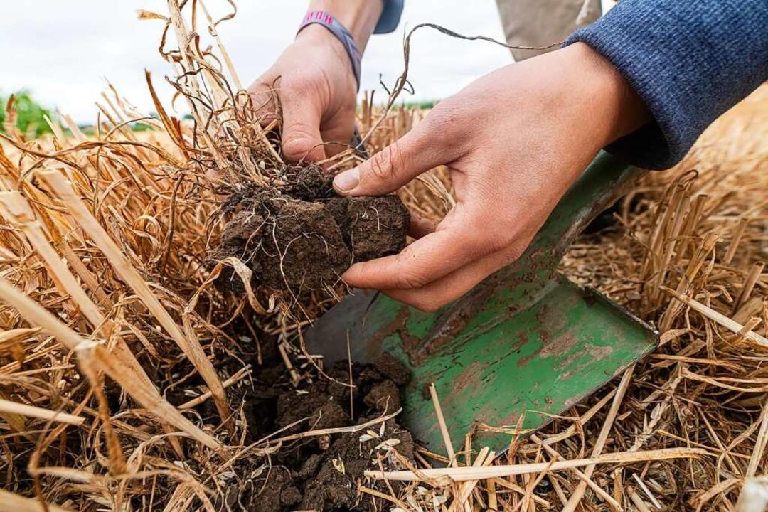 Erst die Pestizide und Mineraldünger &...die Dürre gibt dem Boden nun den Rest.  | Foto: ANDRE KUNZELMANN