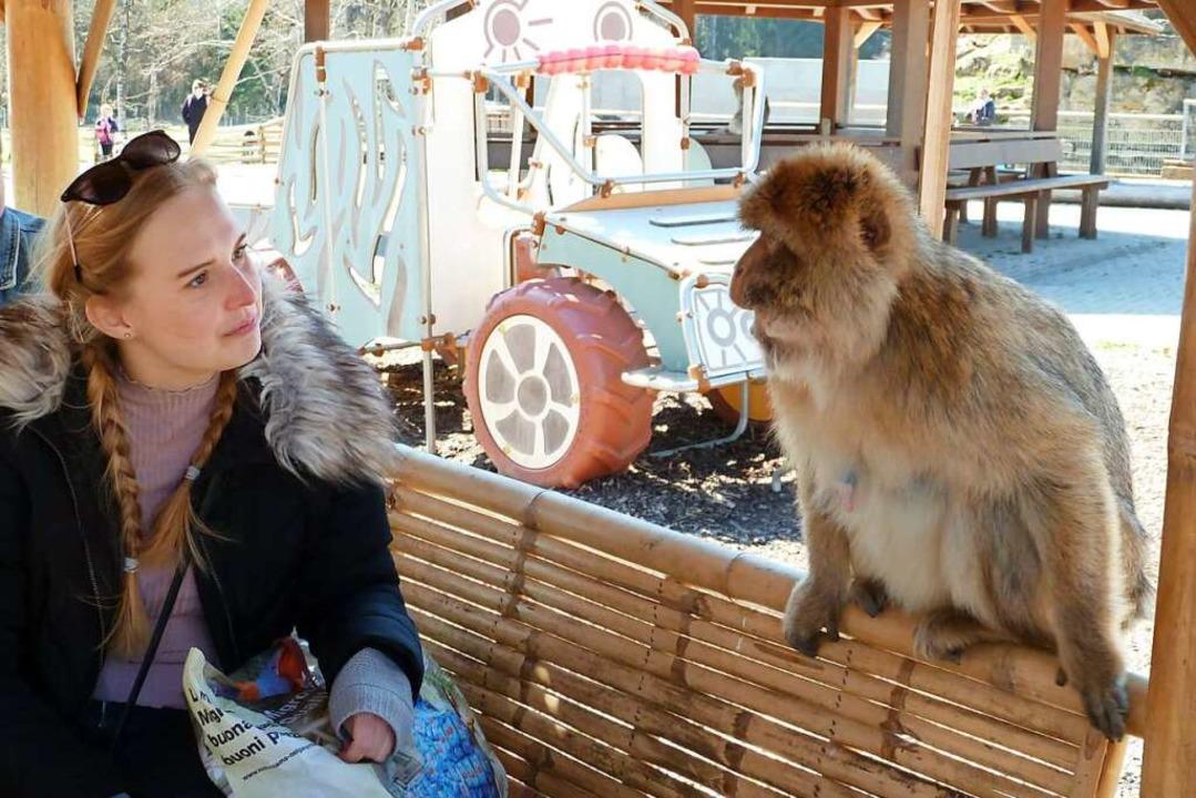 Kennen wir uns? Ein Berberaffe beäugt eine Besucherin.  | Foto: Heidrun Simoneit