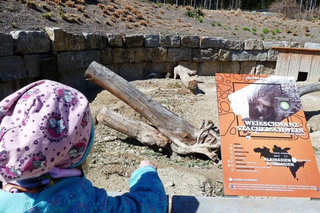 Die Stachelschweine halten sich im Hintergrund.  | Foto: Heidrun Simoneit