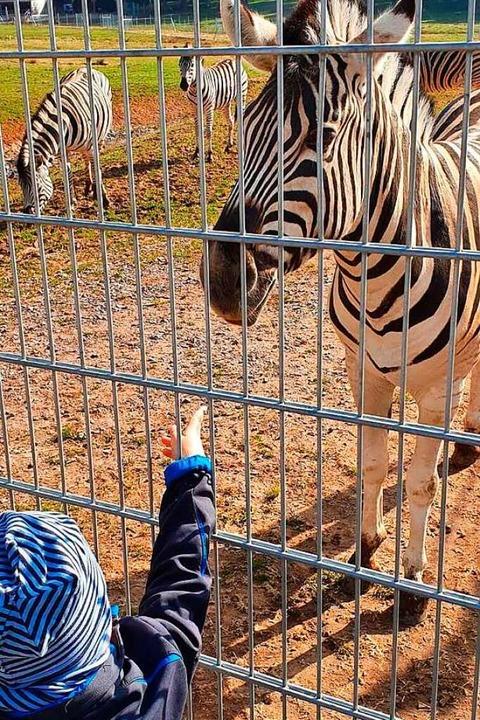 Aug' in Aug' der Bub und  das Zebra  | Foto: Peter Stellmach