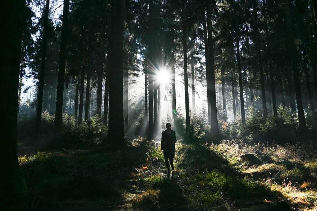 Spazieren im Wald soll entspannen – klappt leider nicht immer.    Foto: Arne Dedert (dpa)