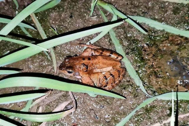 Naturschützer und Feuerwehr retten Amphibien in Lahr