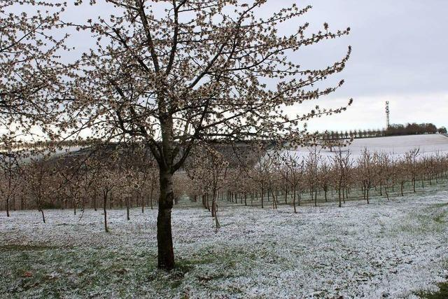 Landwirte im Markgräflerland fürchten angesichts der Kälte um ihre Obsternte