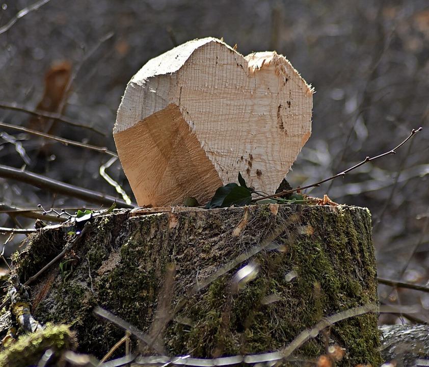Die Baumfällungen auf dem Maienbühl bewegen auch unsere Leser.  | Foto: Thomas Loisl Mink
